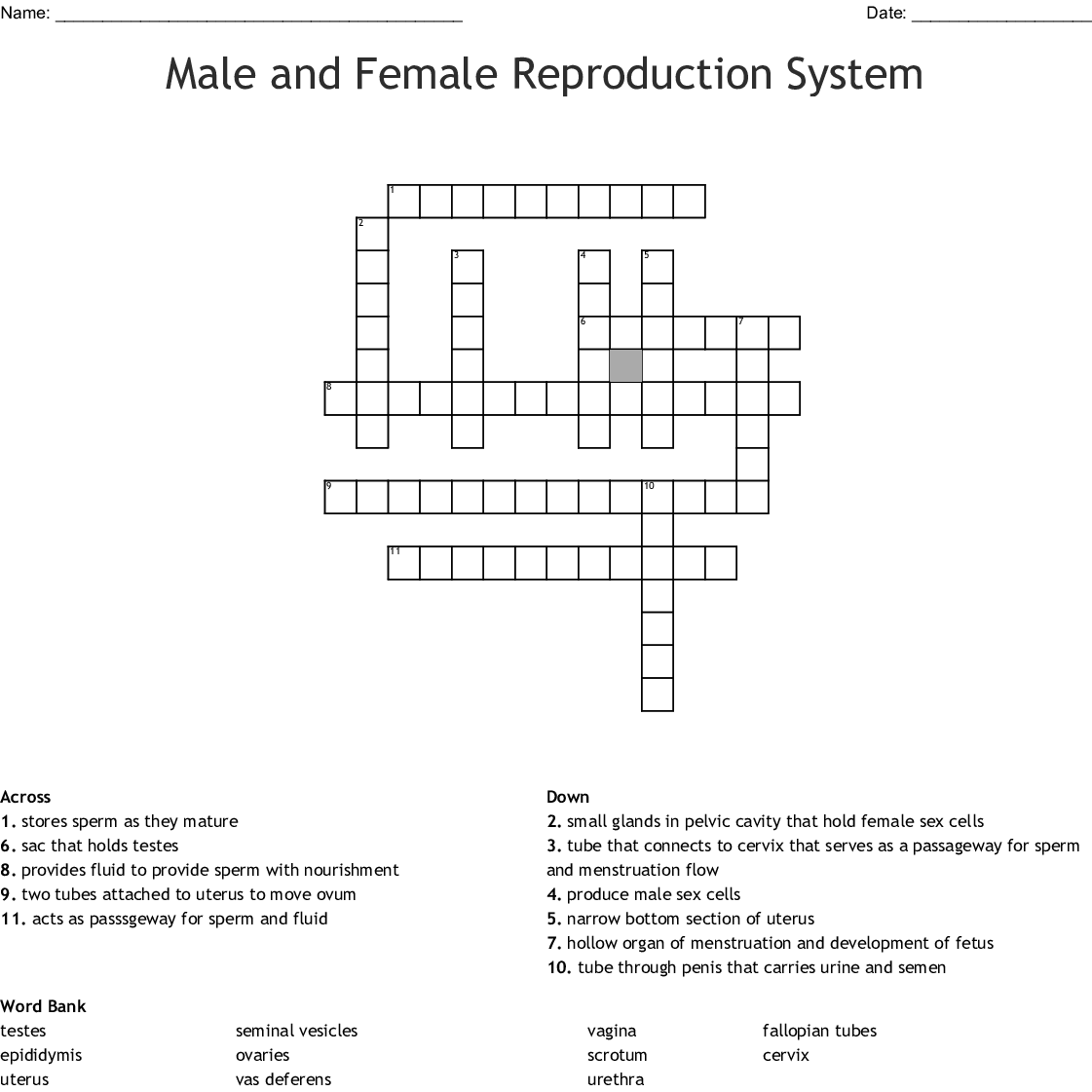 Male Reproductive System Worksheet Answer Key
