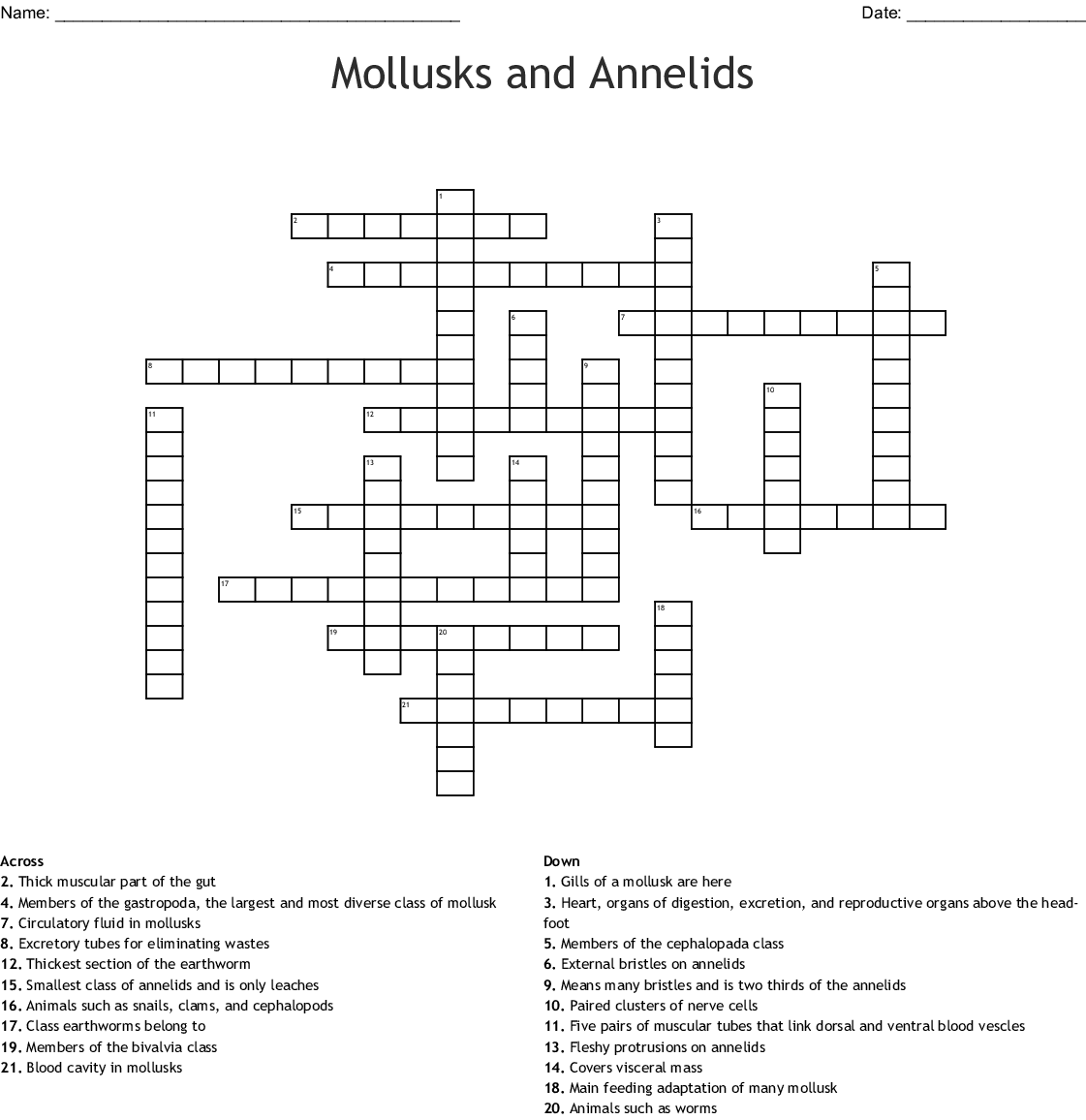 Mollusks Worksheet Answers