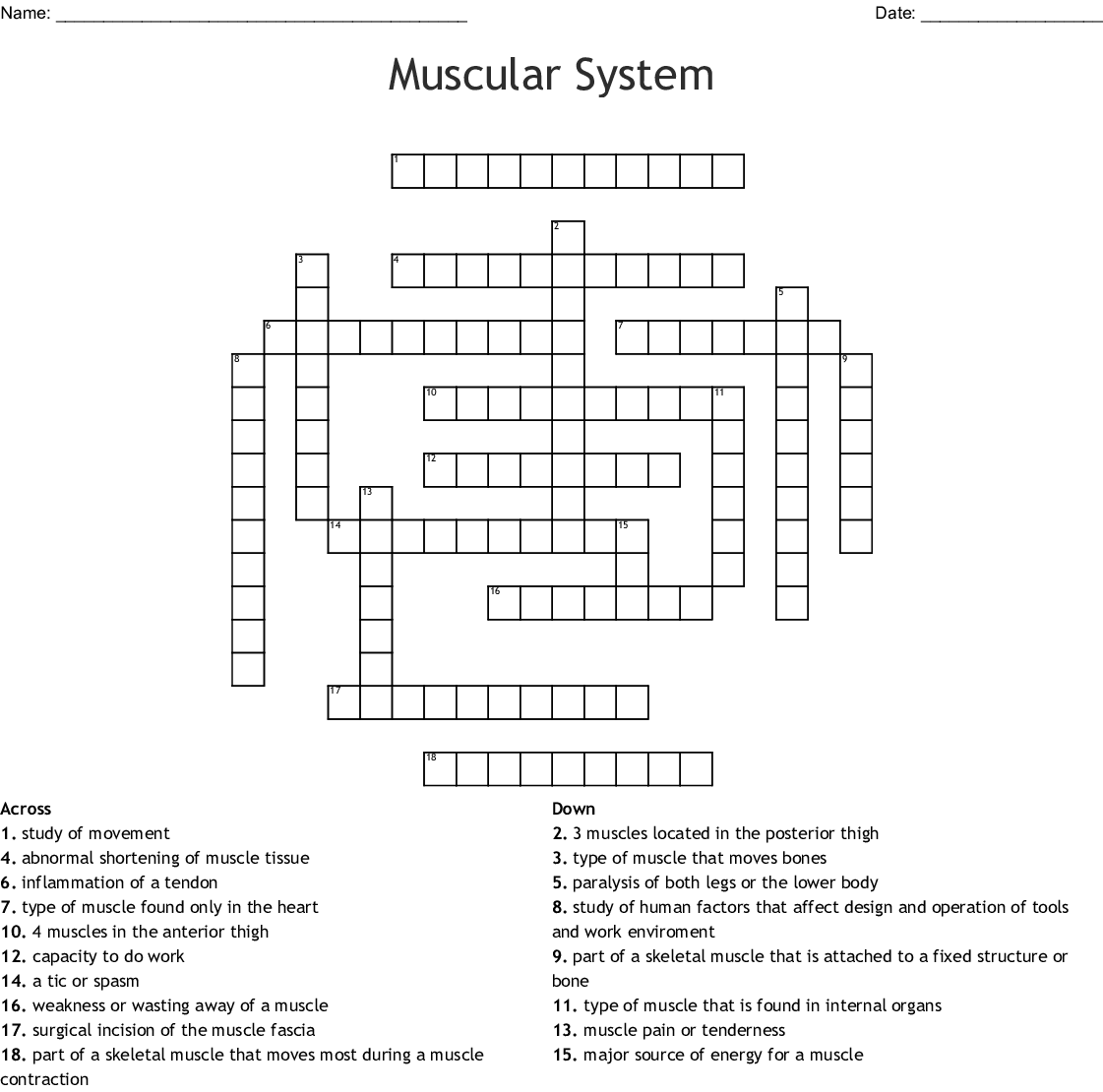 Muscular System Crossword