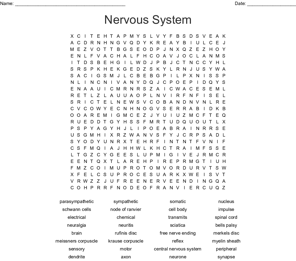 The Nervous System Word Search