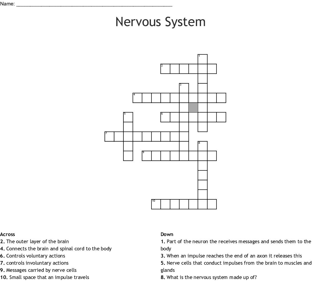 Nervous System Crossword