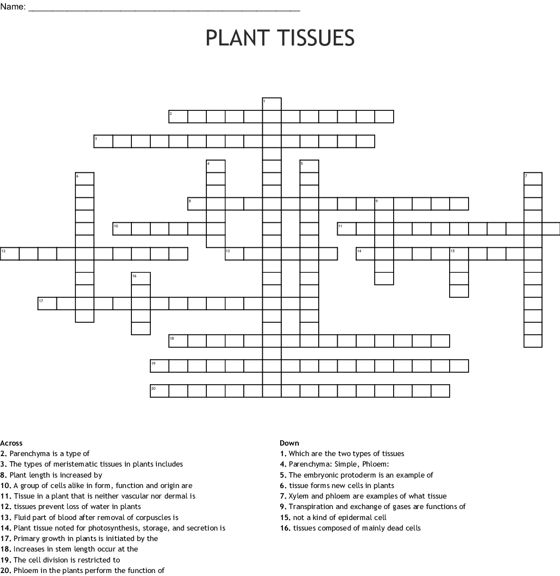 Plant Tissues Crossword