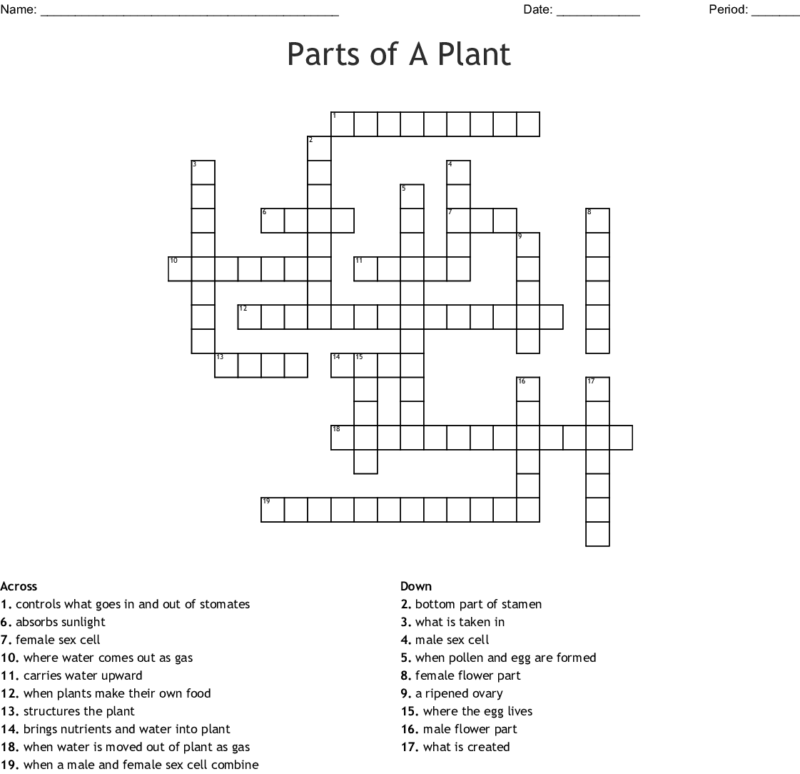 Plant Parts Crossword