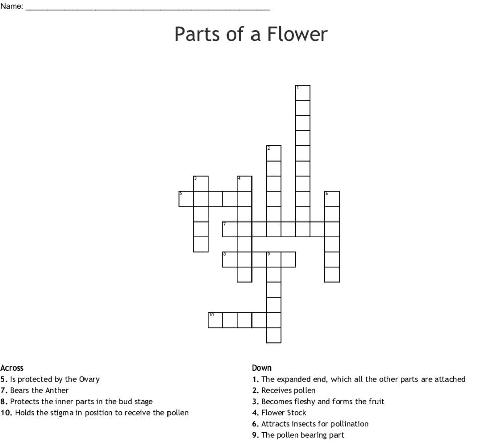 medium resolution of parts of a flower crossword