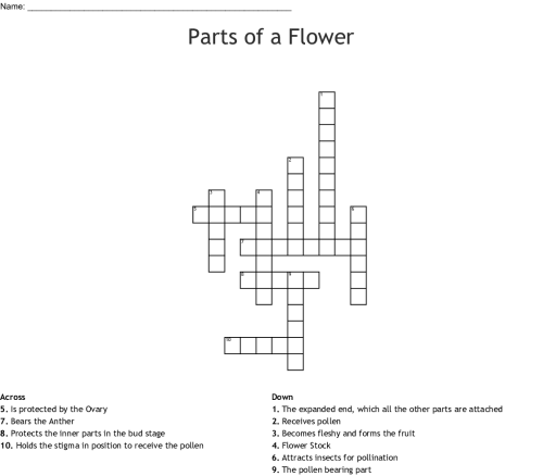 small resolution of parts of a flower crossword