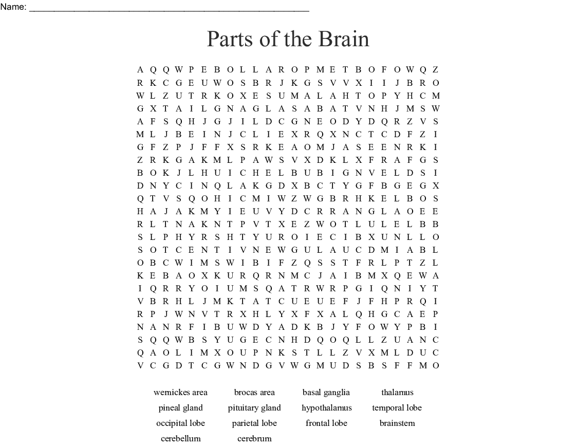 Parts Of The Brain Word Search