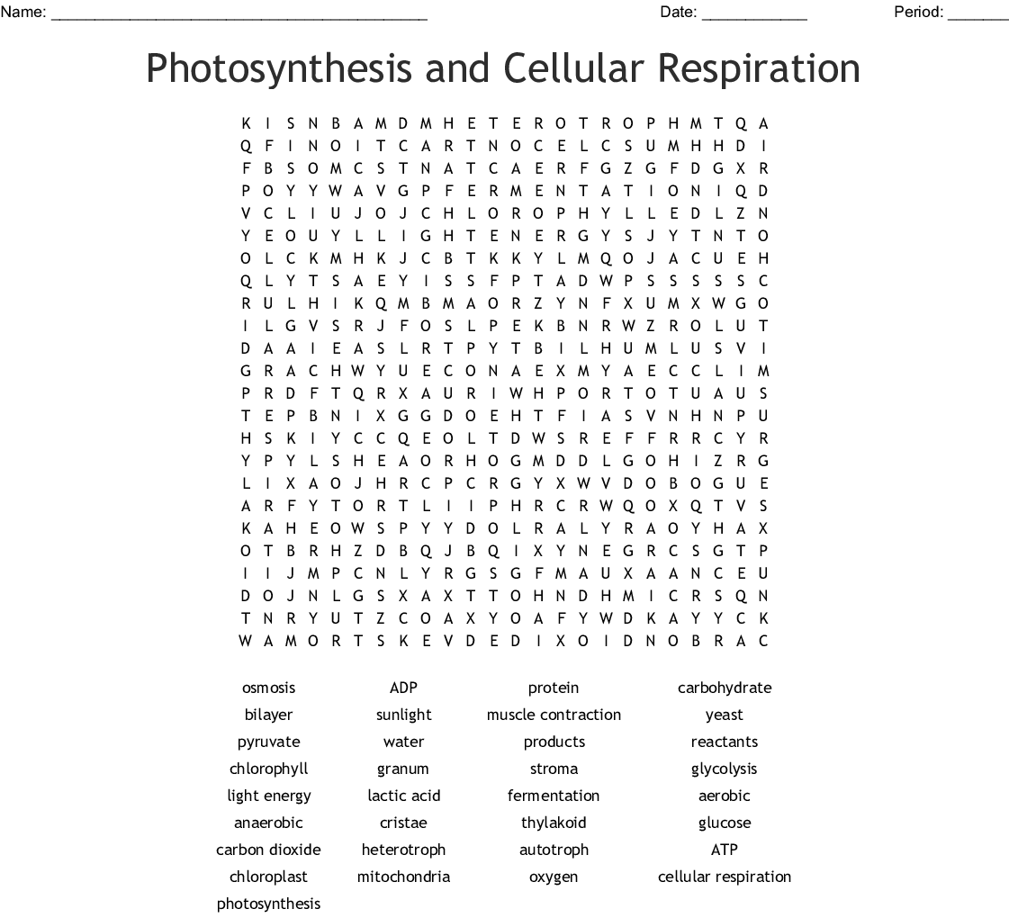 Summary Equation For Photosynthesis And Cellular