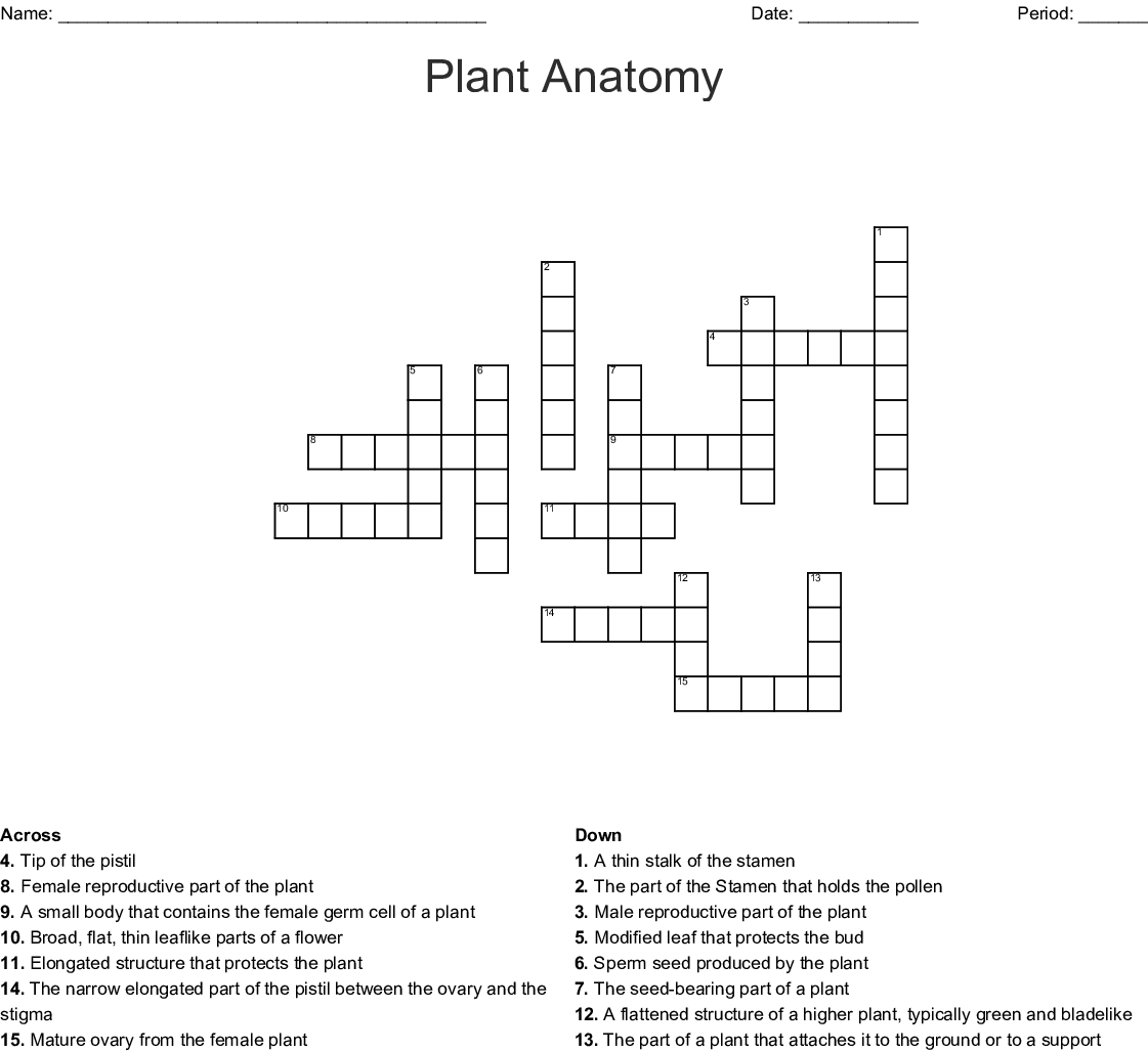 Leaf Anatomy Worksheet Colored Answer Key