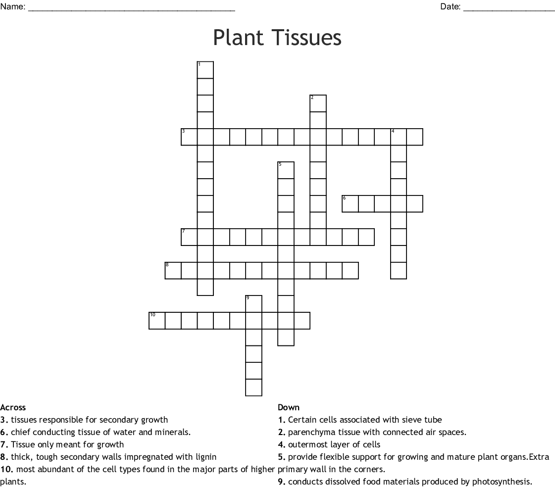 Plant Tissue Crossword