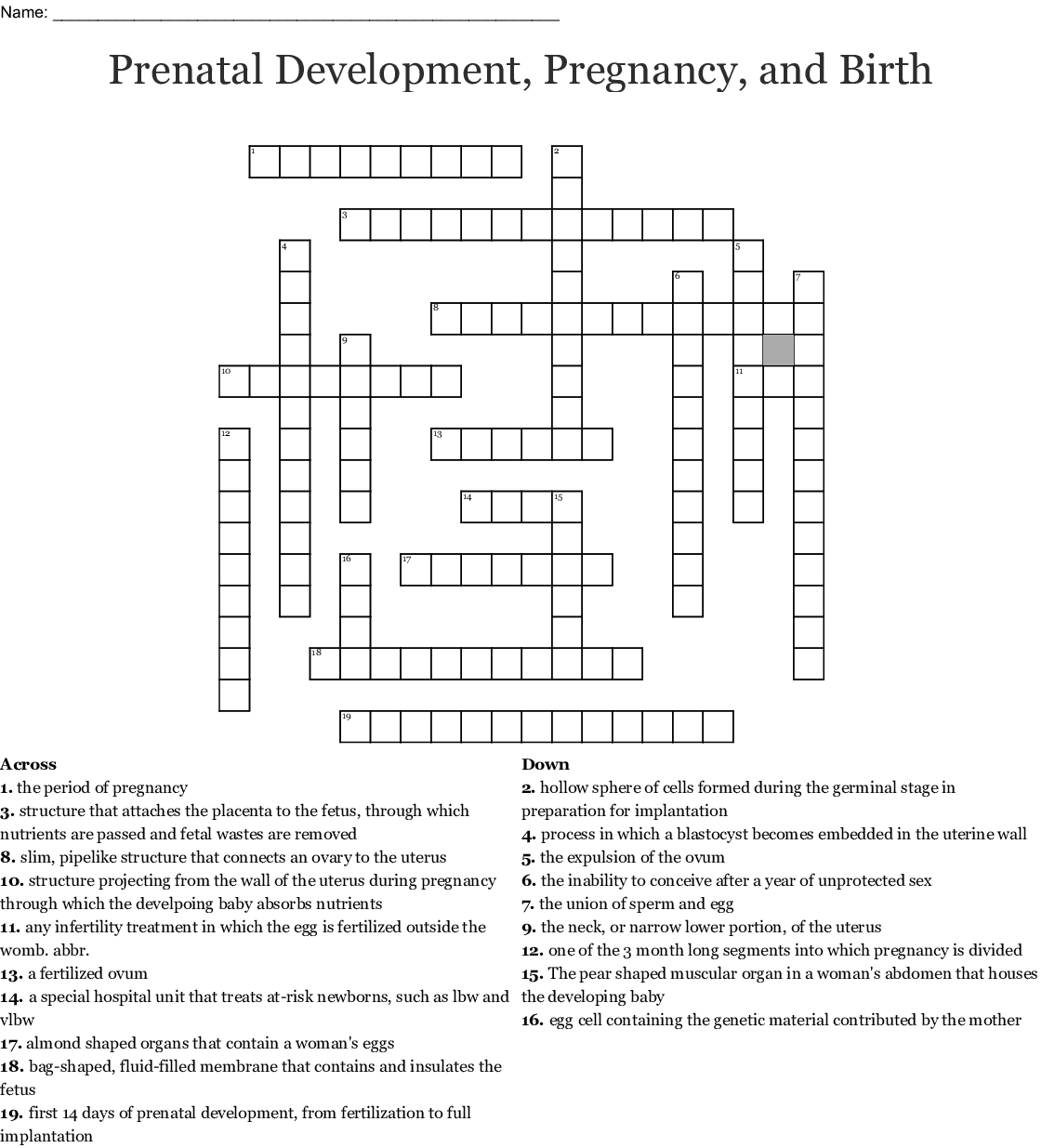 Prenatal Stage Crossword