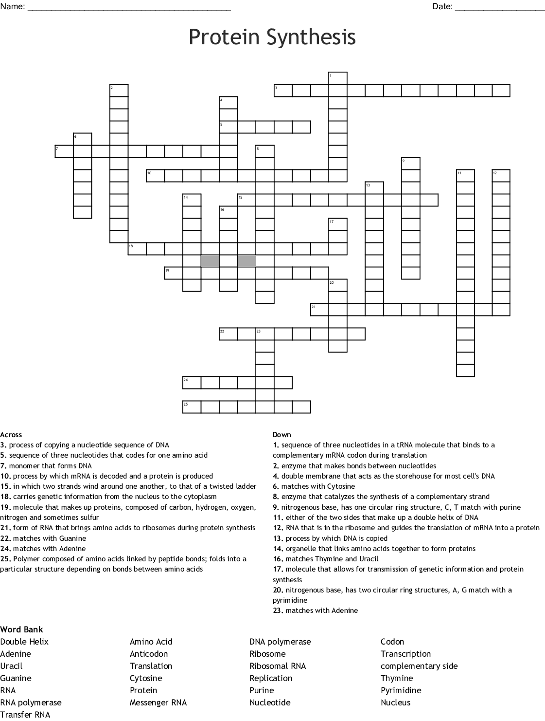 Dna Rna Protein Synthesis Crossword