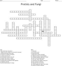 protists and fungi [ 1121 x 1179 Pixel ]