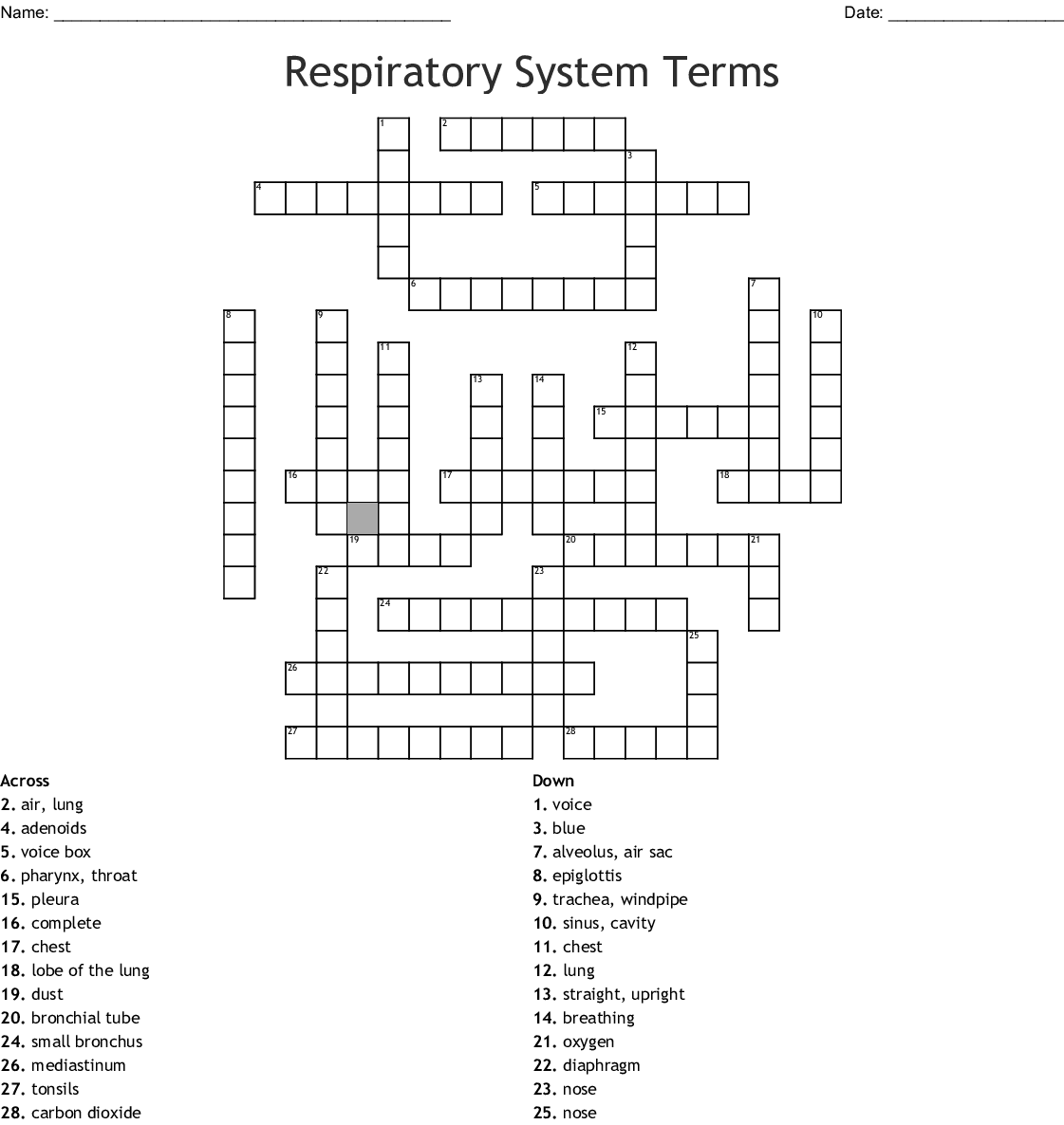 Respiratory system Terminology Combining Forms/Word Roots