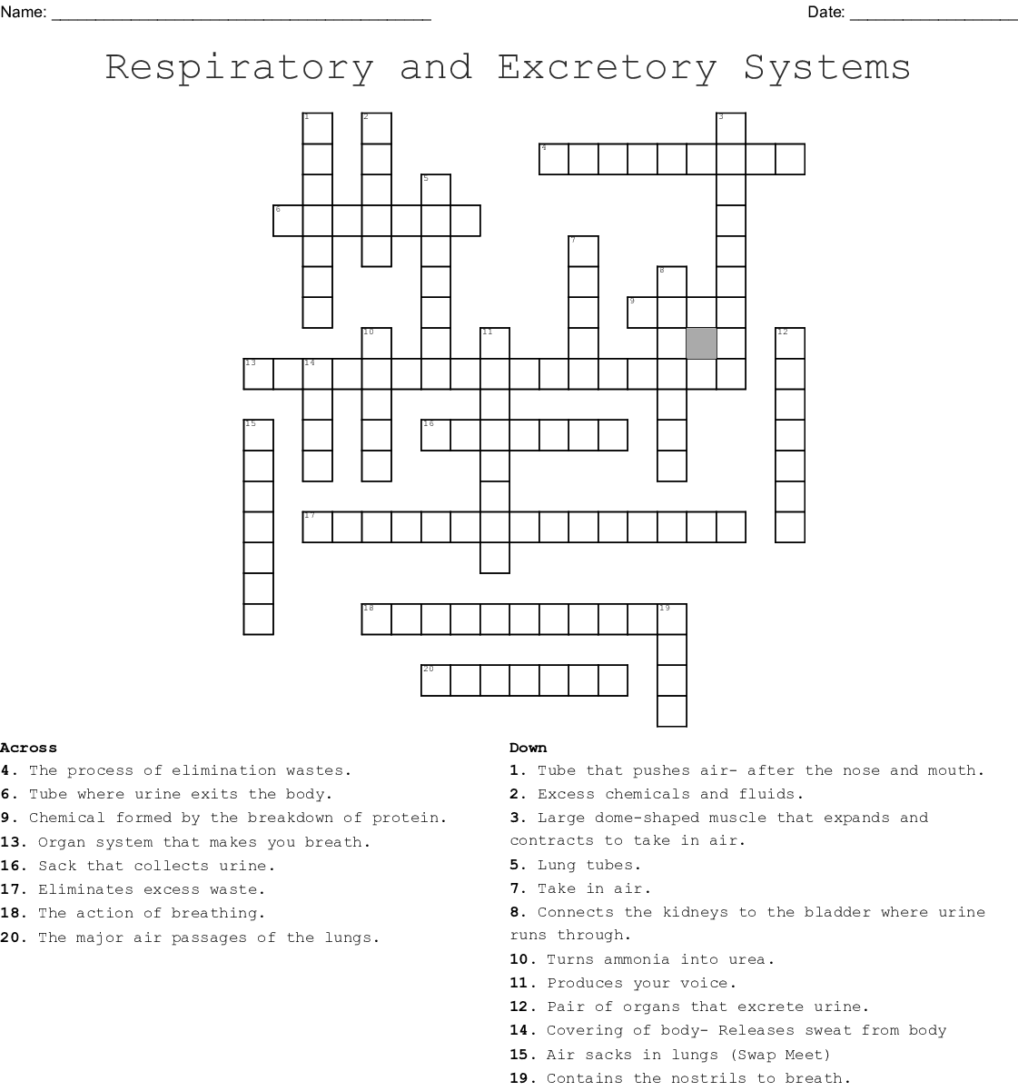 Respiratory And Excretory System Crossword