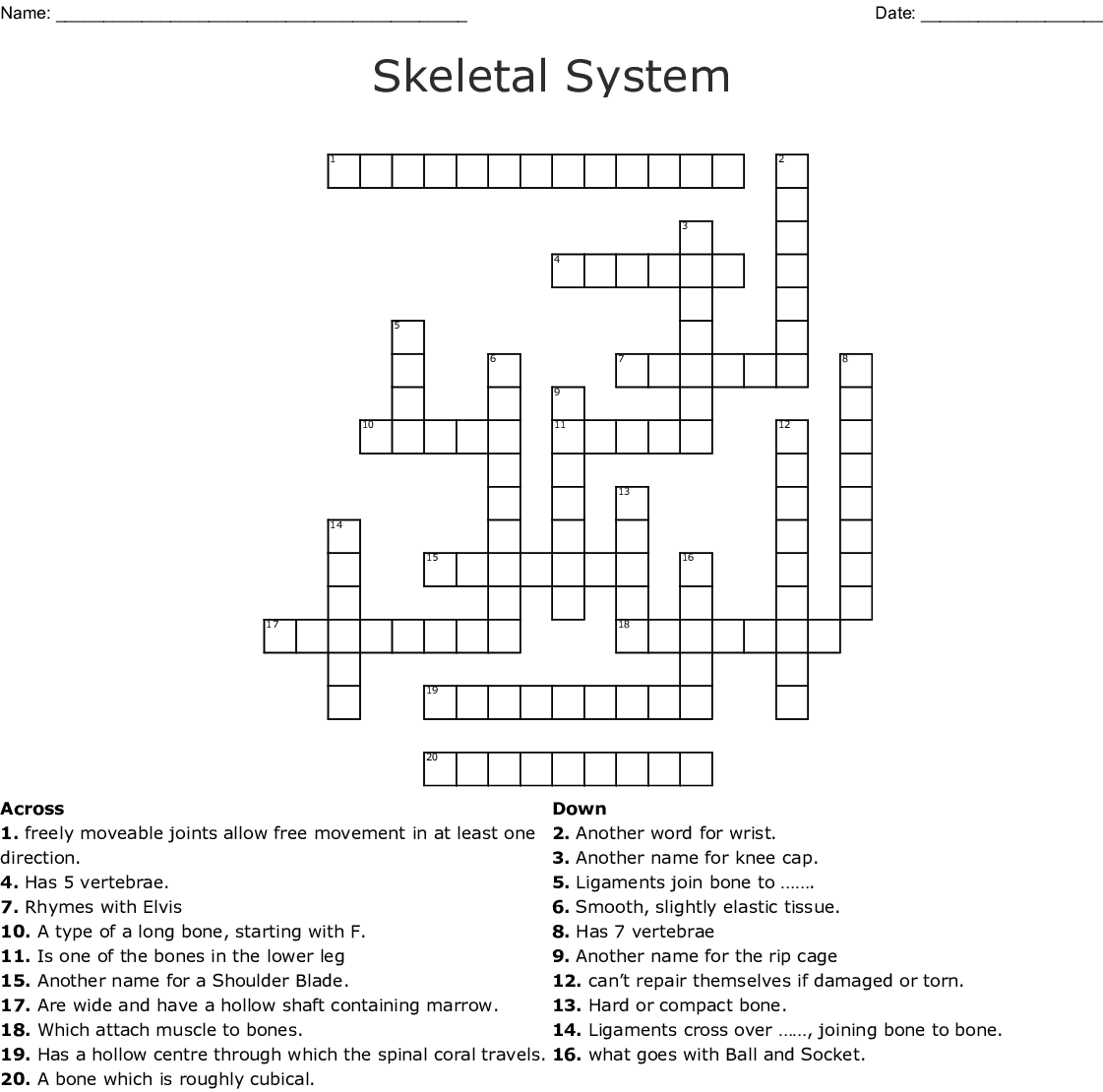 Skeletal System Crossword