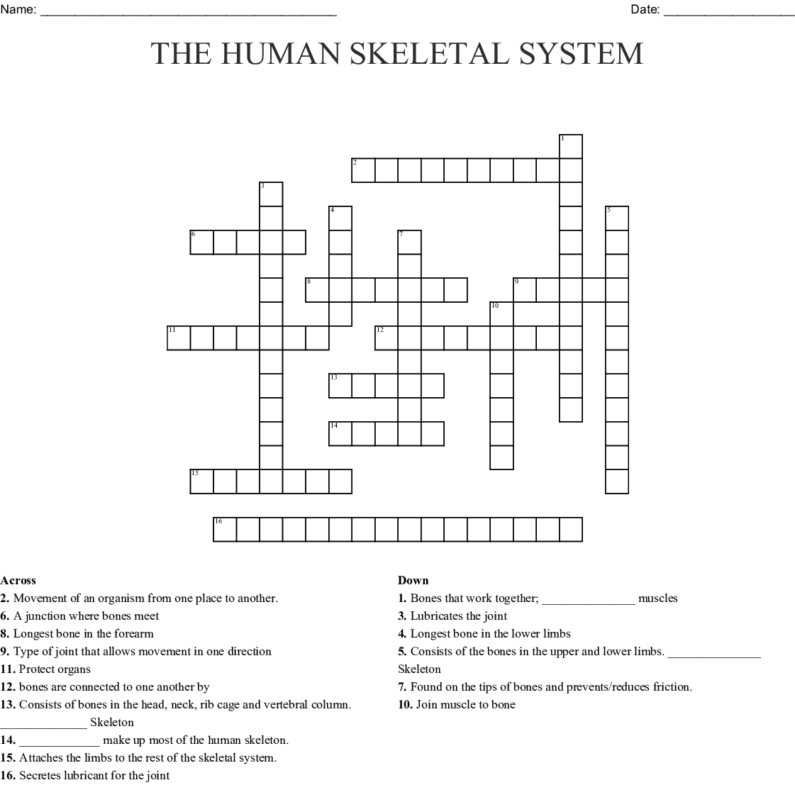 Integumentary Skeletal And Muscular System Crossword