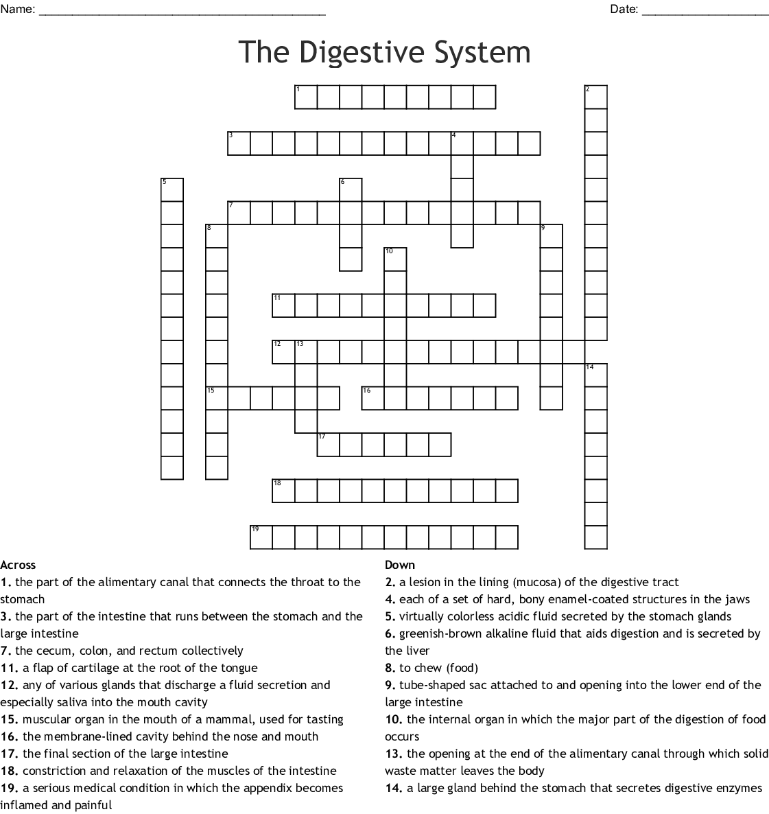 Crossword Puzzle Answer Key Human Digestive System