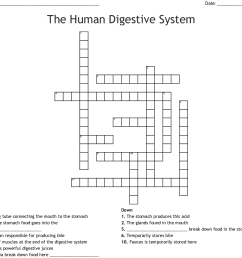 The Human Digestive System Worksheet Answer Key - Nidecmege [ 1011 x 1121 Pixel ]
