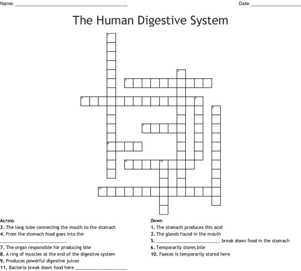 medium resolution of The Human Digestive System Worksheet Answer Key - Nidecmege
