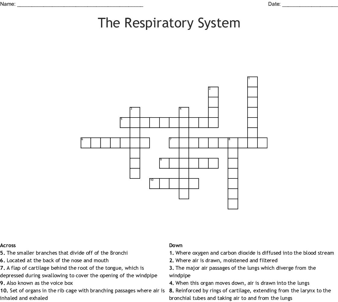 Respiratory System Crossword