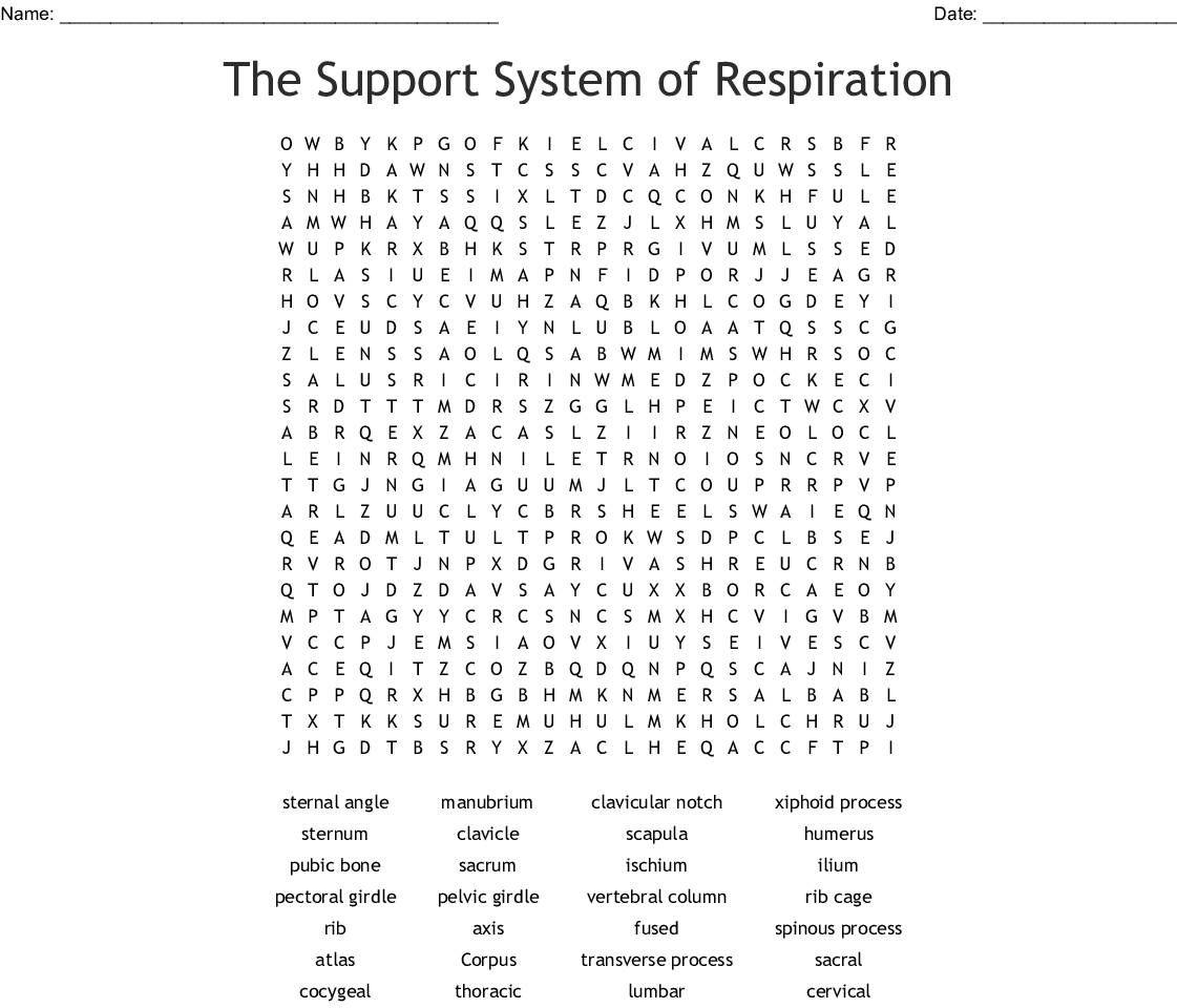 The Support System Of Respiration Word Search