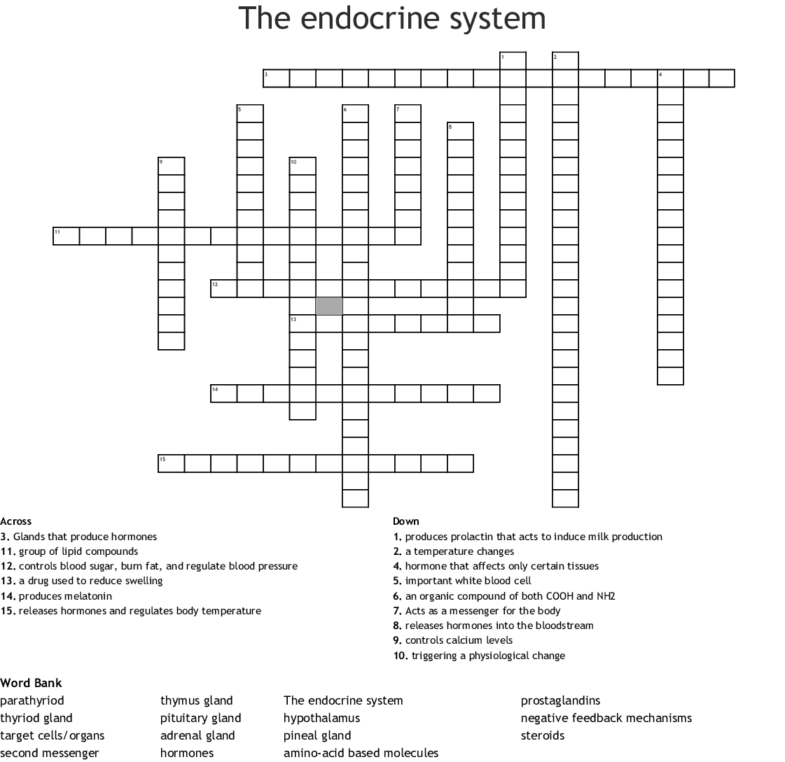 The Endocrine System Crossword