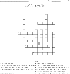 cell cycle crossword [ 1121 x 981 Pixel ]