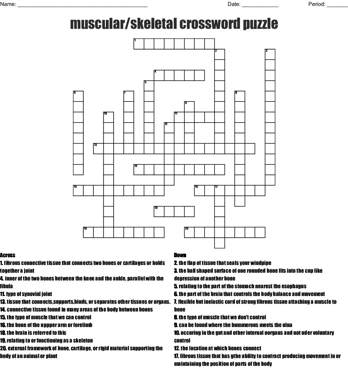 Muscular Skeletal Crossword Puzzle Crossword