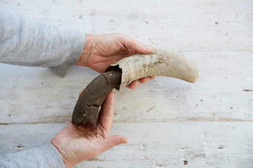 soil-microbiome