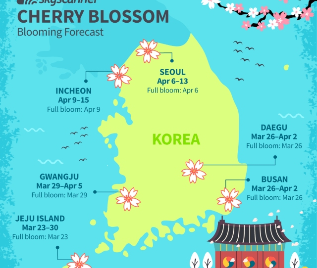 As The Frigid Korean Winter Draws To A Close Towards The End Of March Warmer Weather In The Countrys South Sees The First Cherry Blossoms Of Spring Bloom
