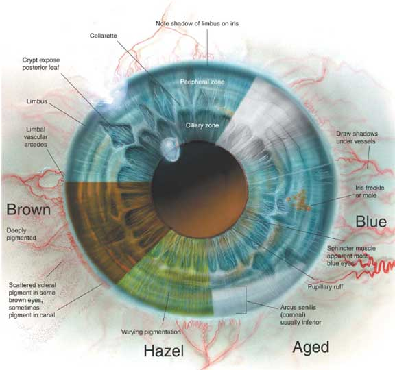 diagram of artificial eye 22re fuel injection wiring anatomy clinic anterior2