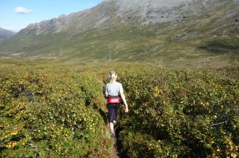 Hedda nedeigjen på flatere mark i Horndalen