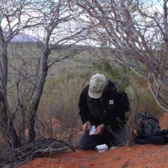 Mondo signing a log in the Australian outback
