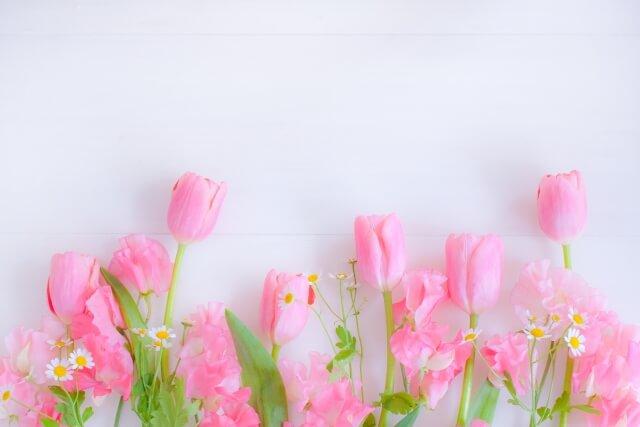 ピンクのチューリップを主にした春の花たちのフレーム