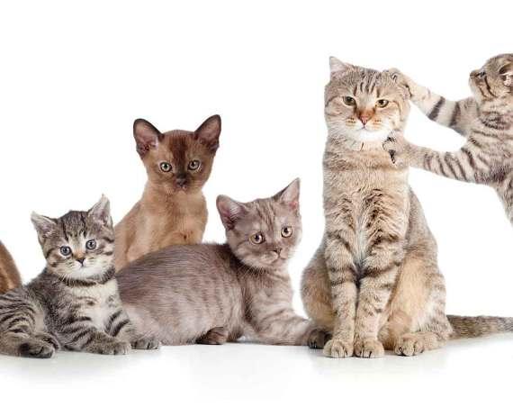 Ehemalige Katzen