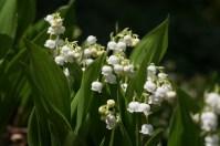 flowers-188076_1280 - kopia