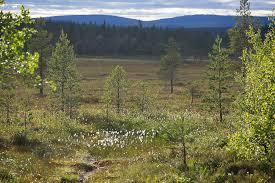 ladda ned (1) fotosidan.se Orsa Finnmark 2