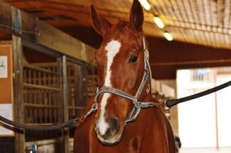 horse-1006348_1920 - kopia (2)