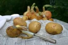 potato-954019_1920