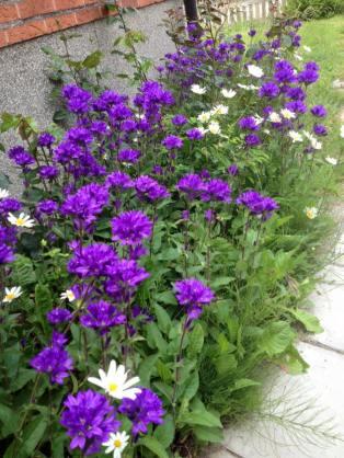GK sommarbild trädgård 1