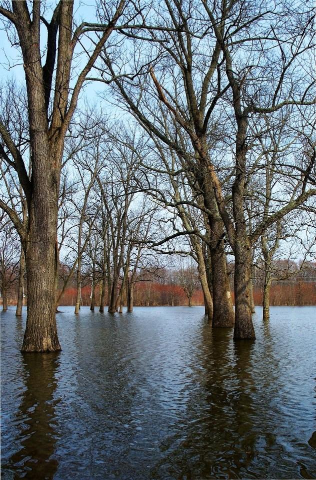 flooding-255758_1920