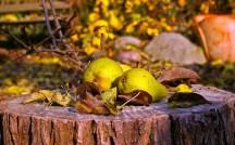 pears-1018490_1920