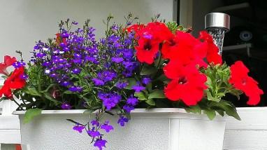Tivedstrollen blomlåda rött och blått