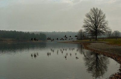Geese Over the Lake