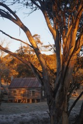 Gooandra Homestead at dawn.