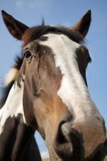 Horse at Edale, long face