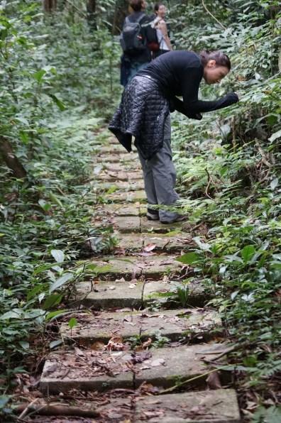 Path, Cat Ba National Park