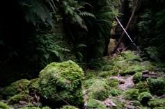 Starlight greenery