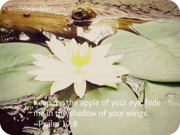 Lilly Pad Flower Psalm 17
