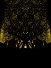 Tree-Baum